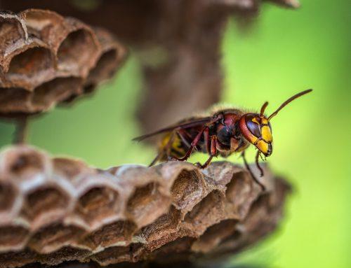 Insektennester entfernen